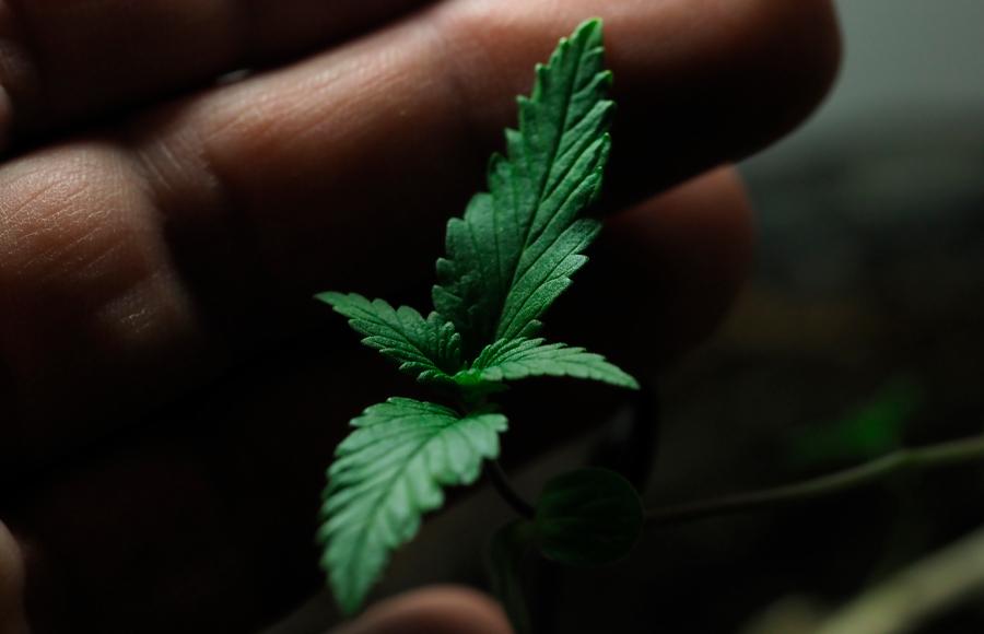 """Webinar """"Importancia del estudio de las adicciones: legalización de la marihuana en México"""""""